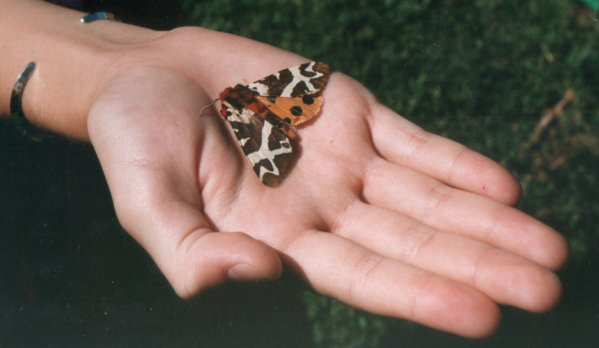 Great Tiger Moth on hand - 1991 film photo