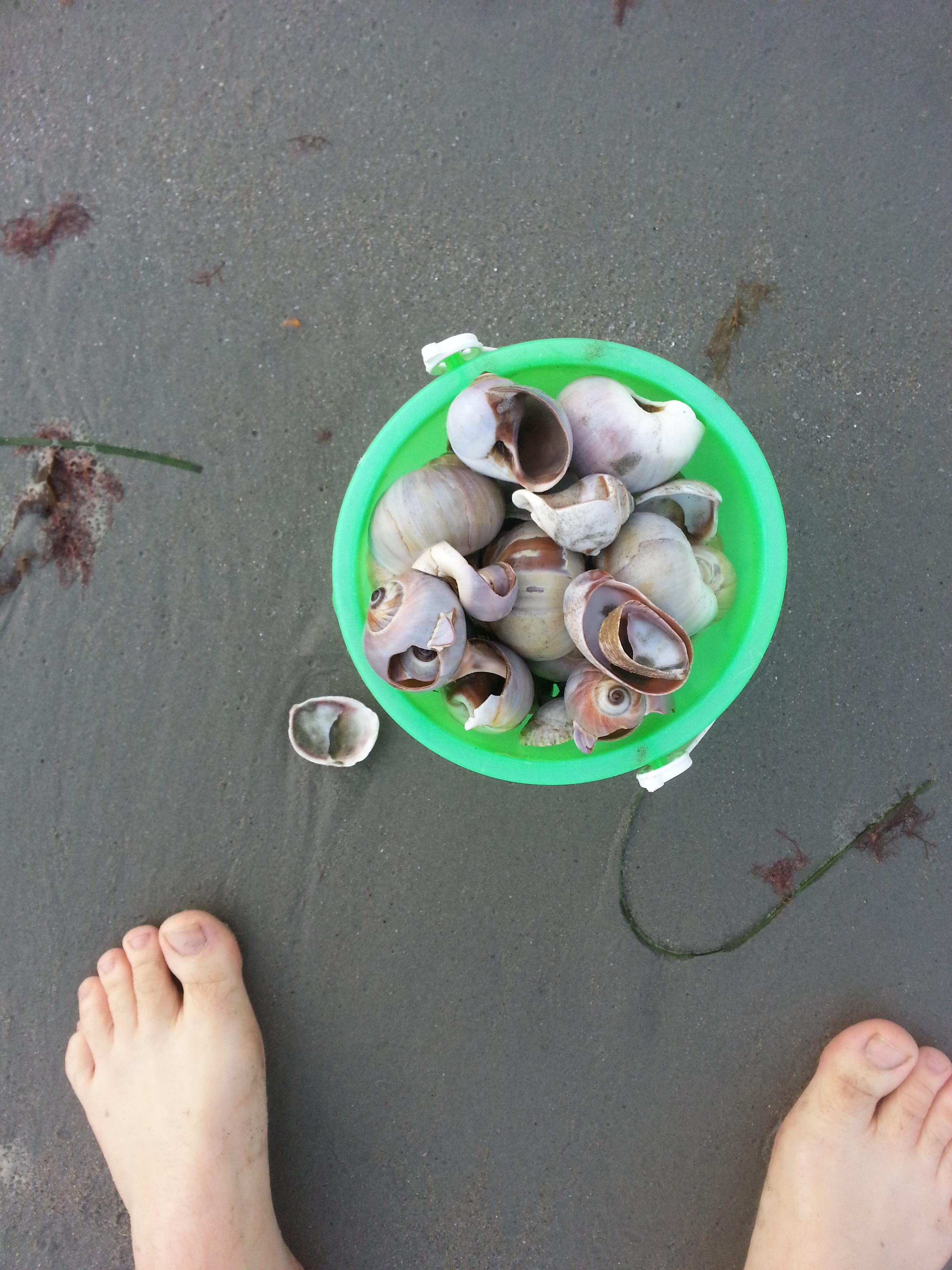 Bucket full of shells
