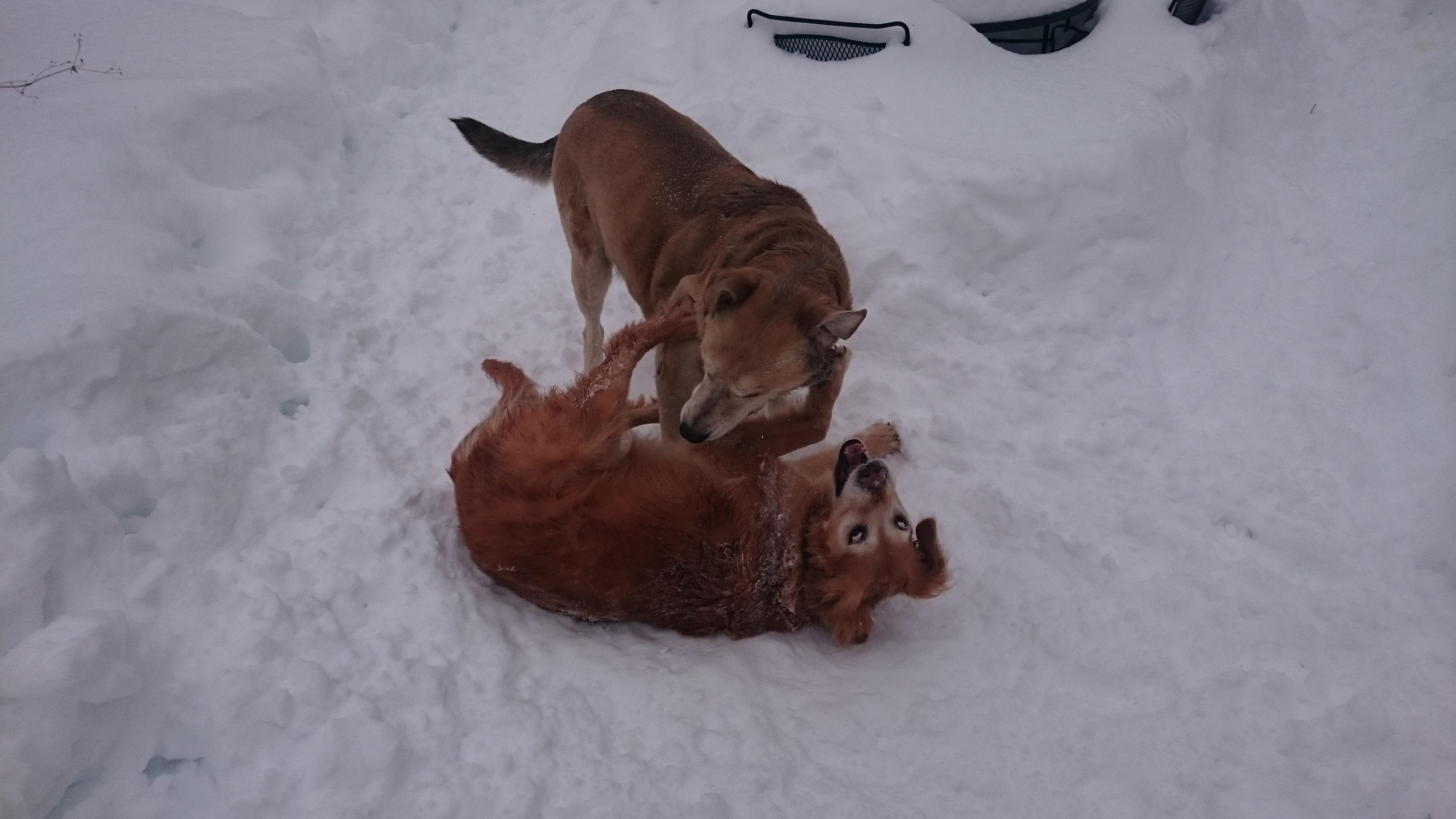 Sherman and Stella at play