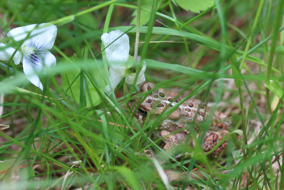 Small toad surrounded by grass and flowers