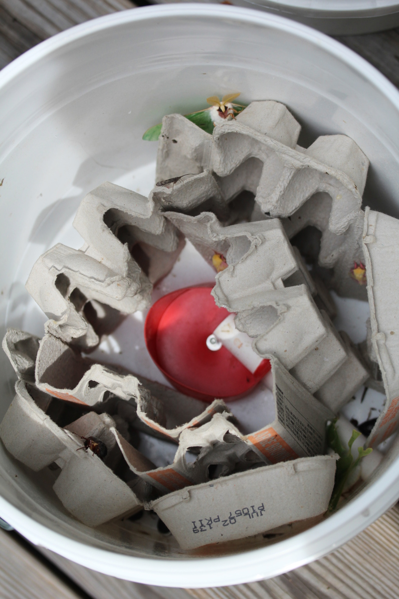 white bucket, paper egg cartons, and a selection of moths