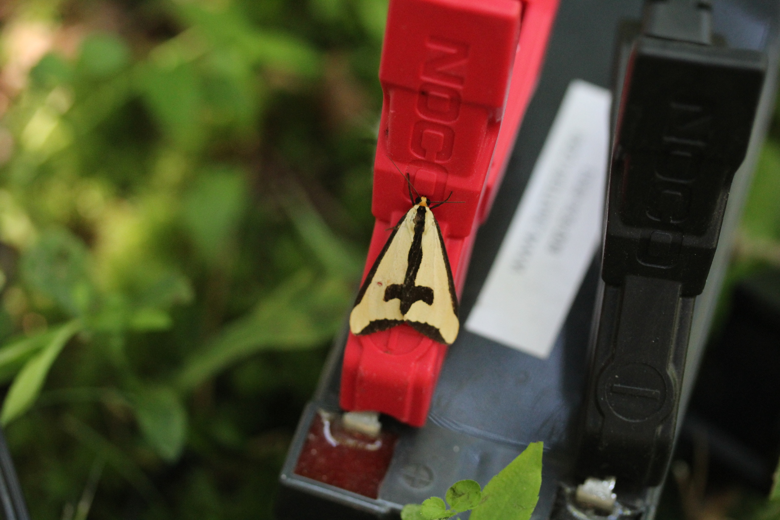 triangular moth on red battery clamp