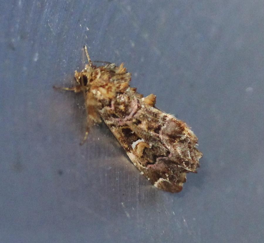 fancy moth on aluminum funnel