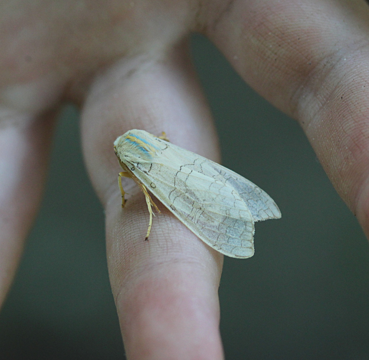 pale moth on George's hand